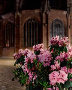 Blumen im Vordergrund mit der Lorenzkirche im Hintergrund
