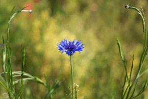 Bild einer Blühte