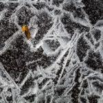 Ein Blatt im Eis