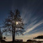 Ein kahler Baum am Ufer eines gefrorenen Sees bei Nacht mit dem Mond im Hintergrund