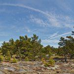 Panorama eines Waldes