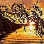 Ein Ast über der Wasseroberfläche mit der tief stehenden Sonne dahinter