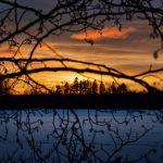 Blick über eine Eisfläche durch Äste hindurch bei Sonnenuntergang