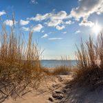 Blick aufs Meer vom Strand durch Dünengras