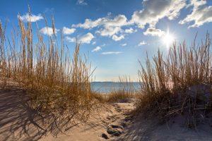 Blick von den Dünen durch Dünengras auf das Meer