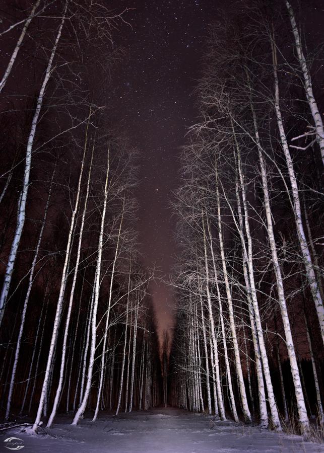 Nachts im Birkenwald