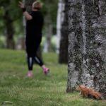 Ein Eichhörnchen beobachtet eine Frau, die ein Workout macht