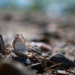 Ein Schmetterling am Boden