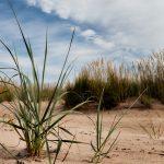 Dünengras im Sand