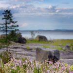 Blick über eine See mit Blumen im Vordergrund