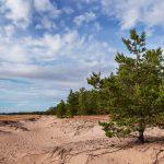 Blick entlang eines Strandes mit Nadelbäumen am rechten Rand