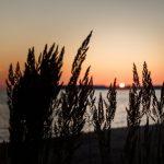 Dunkles Dünengras mt der Sonnen am Horizont