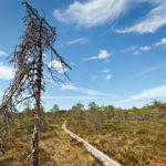 Nationalpark Isosuo und Purijärvi