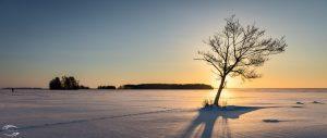 Blick über einen verschneiten See mit der untergehenden Sonnen hinter einem kleinen Baum im Vordergrund
