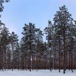 Bild im Inneren eines Waldes mit Baumstämmen und schnebecktem Boden