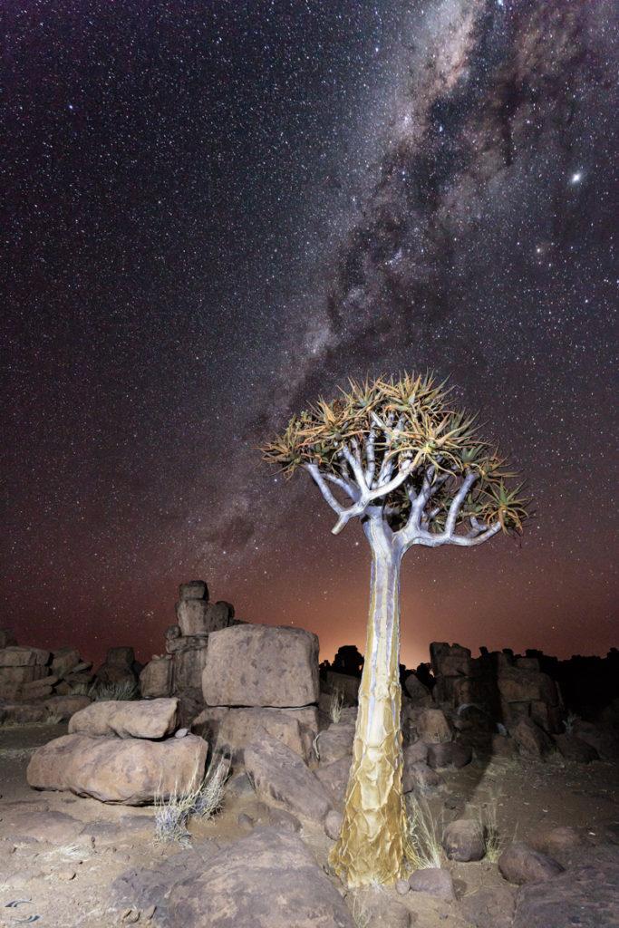Köcherbaum im Giants Playground bei Nacht mit der Milchstraße im Hintergrund