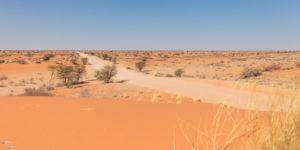 Bild der Kalahari