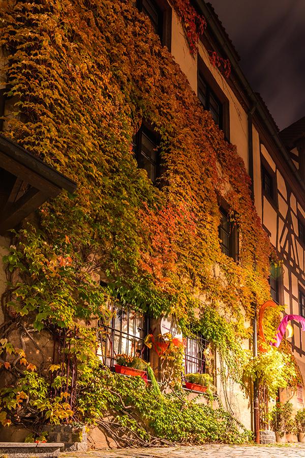 Herbstliches Efeu an einem historischen Gebäude