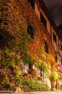 Bild einer Hauswand mit buntem Efeu bei Nacht