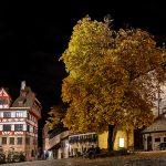 Bild eines herbstlichen Baumes bei Nacht