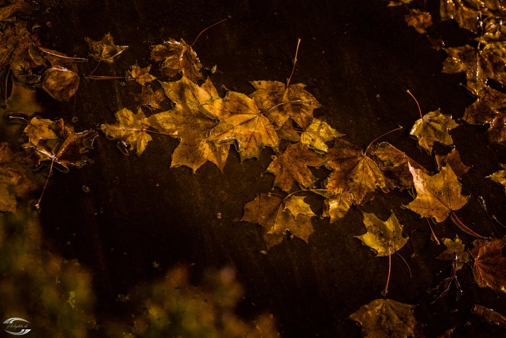 Herbstlaub in einer Pfütze bei Nacht