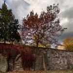 Herbstliche Bäume über der Stadtmauer