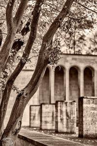 Bild eines Baumes vor der Ehrenhalle in Nürnberg