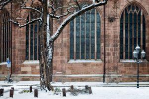 Bild eines verschneiten Baumes vor der Lorenzkirche