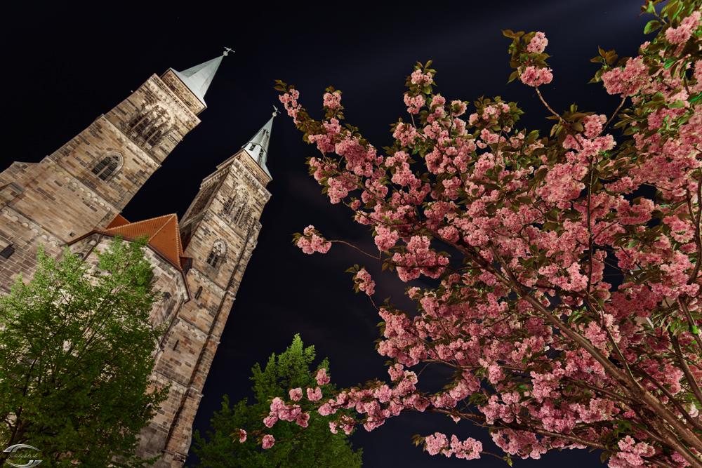 Rosa blühender Busch mit einer Kirche im Hintergrund bei Nacht