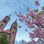 Rosa blühender Busch mit einer Kirche im Hintergrund