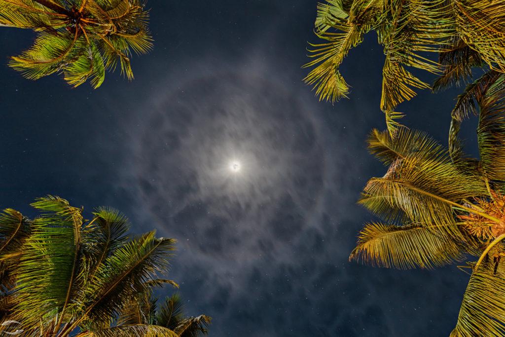 Mond mit Hof von Palmen eingerahmt