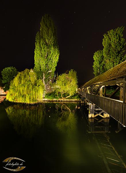 Blick entlang eines Steges auf einen hohen Baum bei Nacht