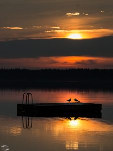 Bild zweier Möven auf einer Badeplattform auf dem Turajärvi mit der tiefstehenden Sonne im Hintergrund