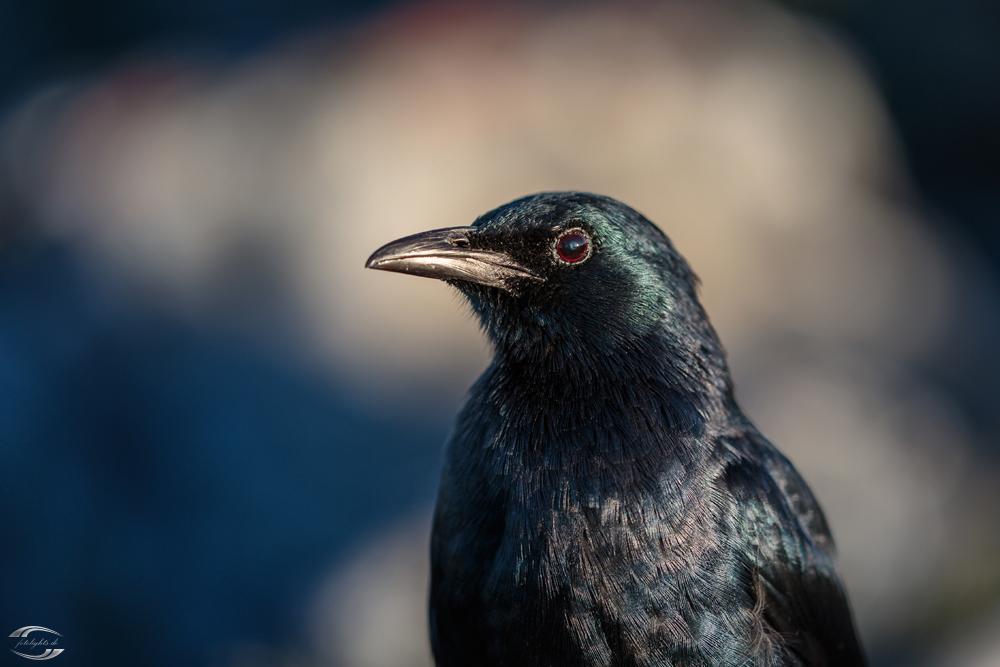 Vogel auf dem Tafelberg